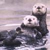 icon-otter